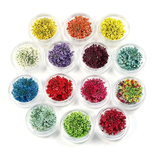 100pcs Pressed Dried Ammi Majus Flower with Box Dry Plants For Epoxy Resin Pendant Necklace Jewelry Making Craft DIY Accessories