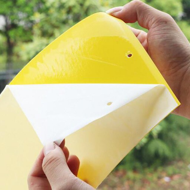 1 pcs Strong Flies Traps Bugs Sticky Board Catching Aphid Insects Pest Killer Outdoor Fly Trap for Aphids Fungus
