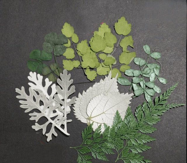 100pcs Dried Pressed Leaf Leaves Plants Herbarium For Jewelry Postcard Photo Frame Phone Case Making DIY