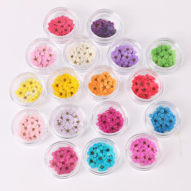 100pcs Pressed Dried Narcissus Plum Blossom Flower With Box For Epoxy Resin  Jewelry Making Nail Art Craft DIY Accessories