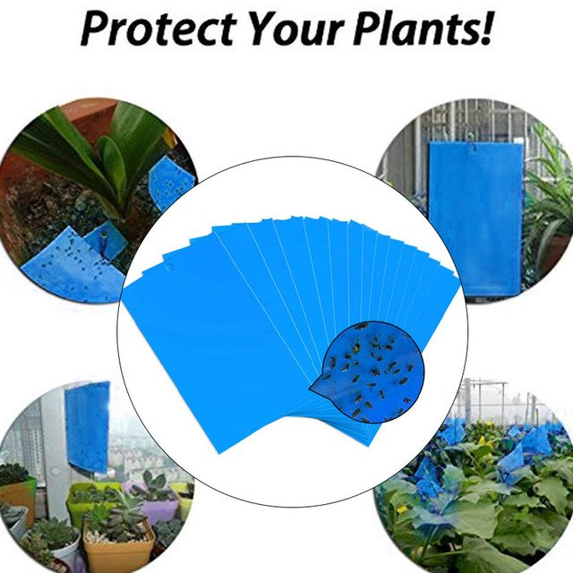 Bugs Sticky Board Pest Killer 20pcs Blue Board GnatsLeaf Catching Aphid Insects Double Side Fly Trap Outdoor Orchard Fungus