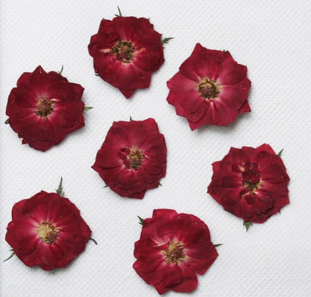 250pcs Pressed Press Dried Rose Flower Filler For Epoxy Resin Pendant Necklace Jewelry Making Craft DIY Accessories