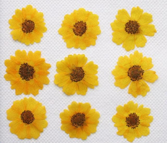 250pcs 25mm Pressed Dried Chrysanthemum Flower Dry Plants For Epoxy Resin Pendant Necklace Jewelry Making Craft DIY Accessories