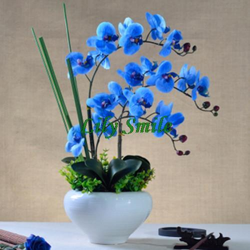 Rare Blue Orchid Seeds 10pcs/bag Balcony Bonsai Butterfly Orchid Flower Home Garden DIY Moth Orchid Seeds Free Shipping