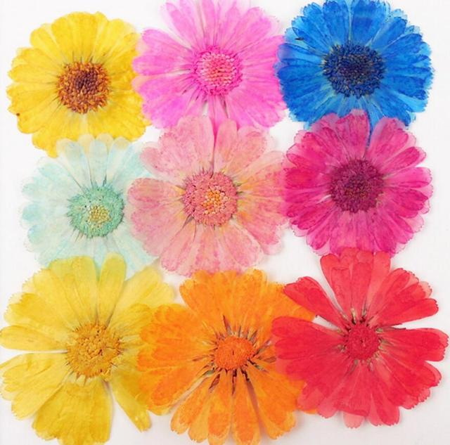 120pcs Pressed Press Dried Pot Marigold Flower Plants For Epoxy Resin Pendant Necklace Jewelry Making Craft DIY Accessories