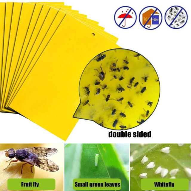 Yellow Board Strong Flies Traps Pest Killer Economic Convenient Double Side Fungus Bugs Sticky Board for Fly Trap Drop Shipping